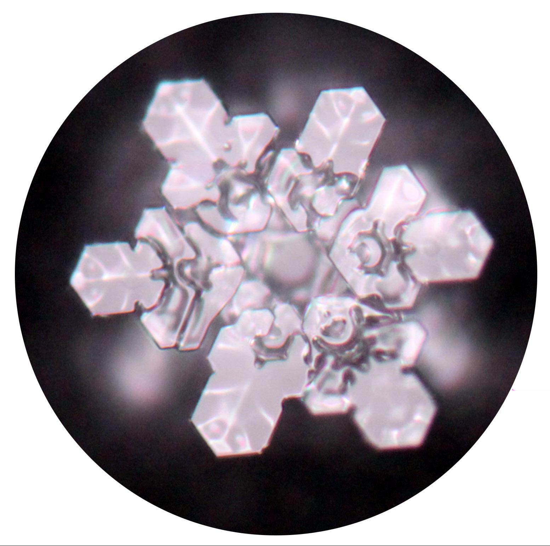 PRIMUSONA | Element Wasser 1