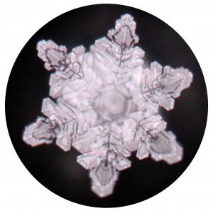 PRIMUSONA | Element Wasser 2